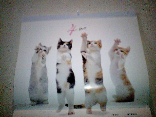 我が家の猫さんたち
